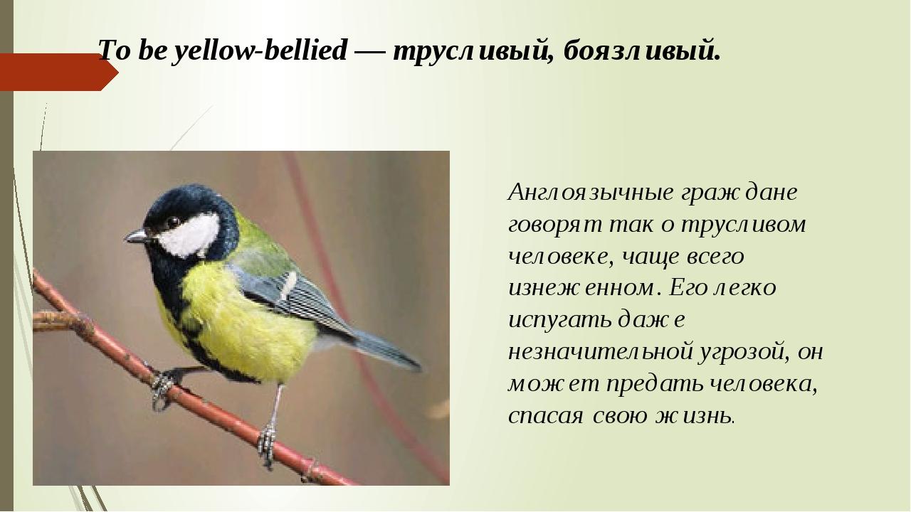 To be yellow-bellied — трусливый, боязливый. Англоязычные граждане говорят та...