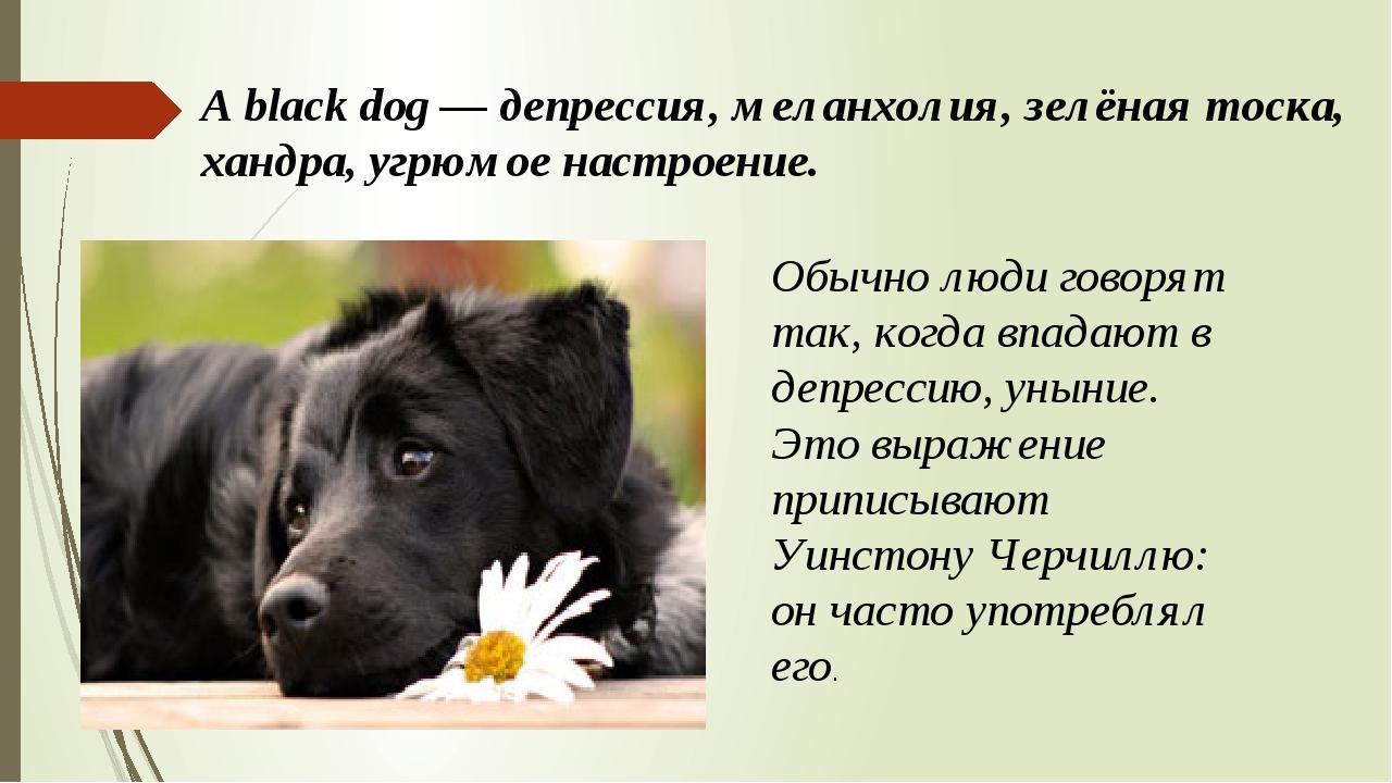 A black dog — депрессия, меланхолия, зелёная тоска, хандра, угрюмое настроени...