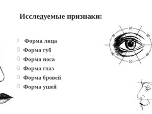 Исследуемые признаки: Форма лица Форма губ Форма носа Форма глаз Форма бровей
