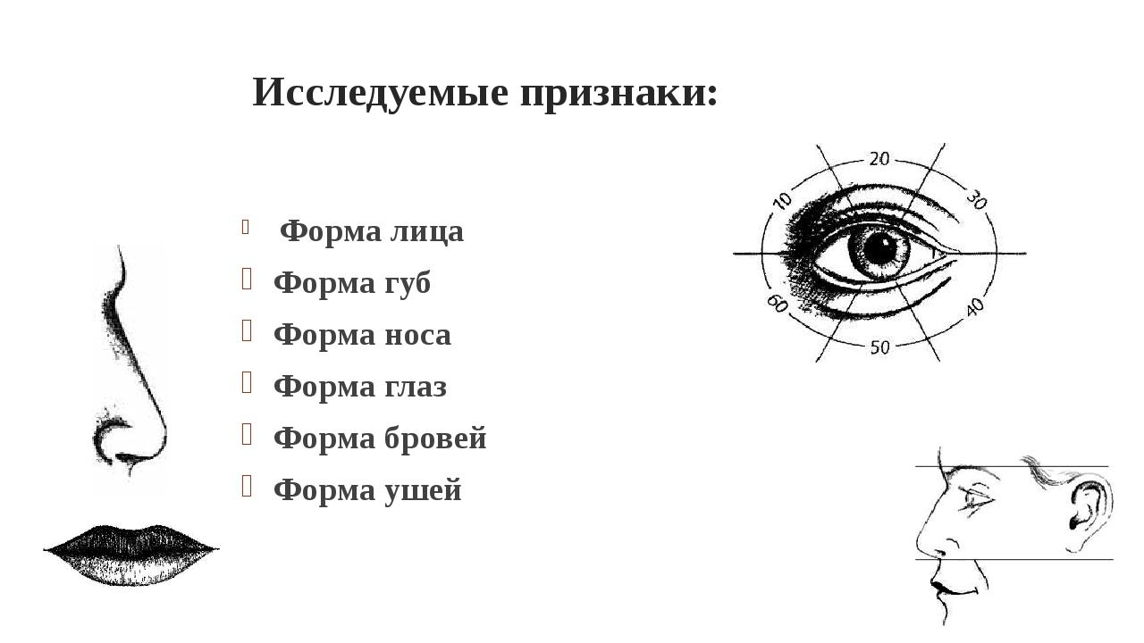 Исследуемые признаки: Форма лица Форма губ Форма носа Форма глаз Форма бровей...