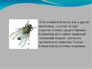 Тело комнатной мухи, как и других насекомых , состоит из трех отделов: головы