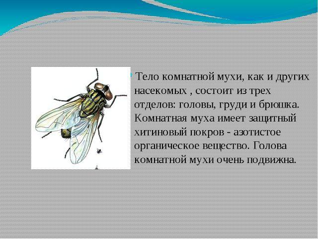 Тело комнатной мухи, как и других насекомых , состоит из трех отделов: головы...