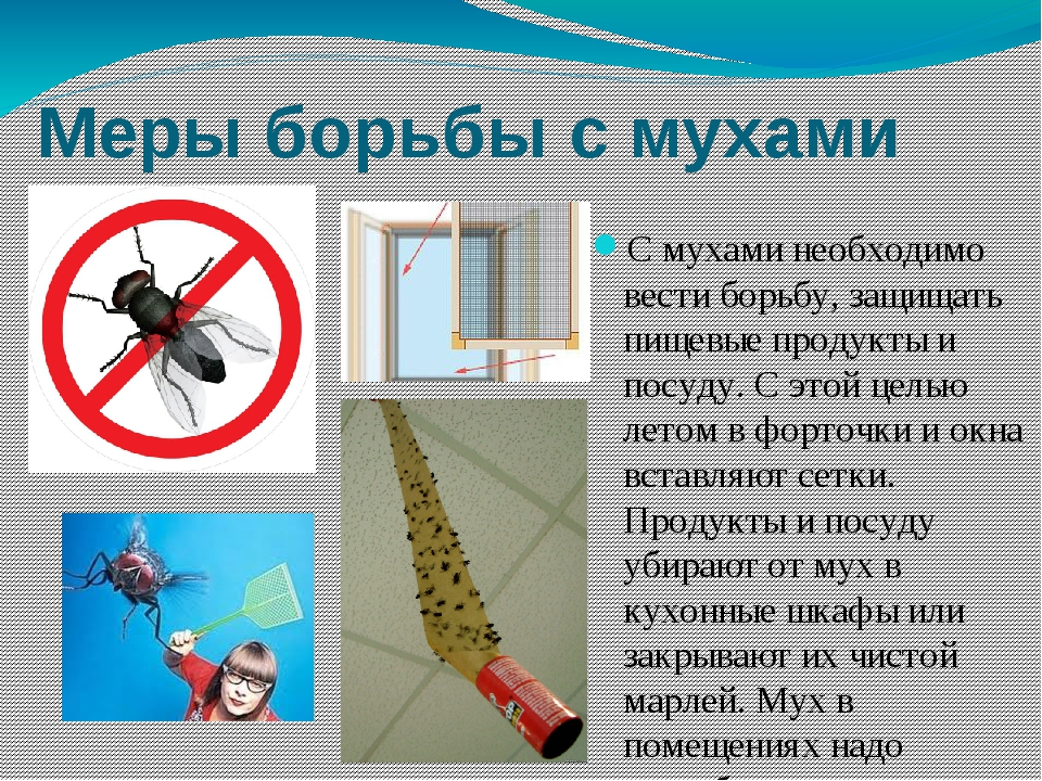 Меры борьбы с мухами С мухами необходимо вести борьбу, защищать пищевые проду...