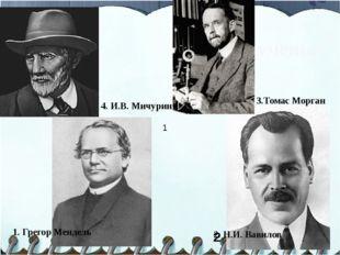 Великие ученые 1. Грегор Мендель 3.Томас Морган 2 2. Н.И. Вавилов 1 4. И.В. М