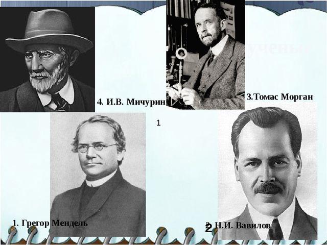 Великие ученые 1. Грегор Мендель 3.Томас Морган 2 2. Н.И. Вавилов 1 4. И.В. М...