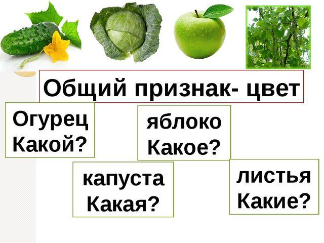 Общий признак- цвет Огурец Какой? капуста Какая? яблоко Какое? листья Какие?