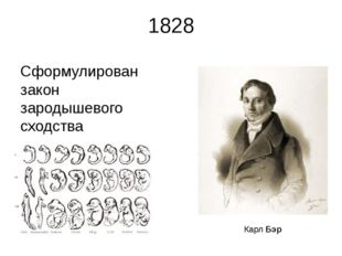 1828 Сформулирован закон зародышевого сходства Карл Бэр Карл Бэр — ученый-ест