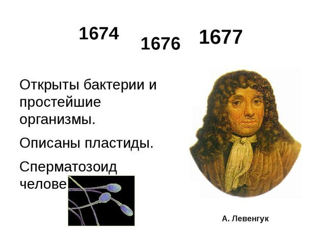 1677 Открыты бактерии и простейшие организмы. Описаны пластиды. Сперматозоид...