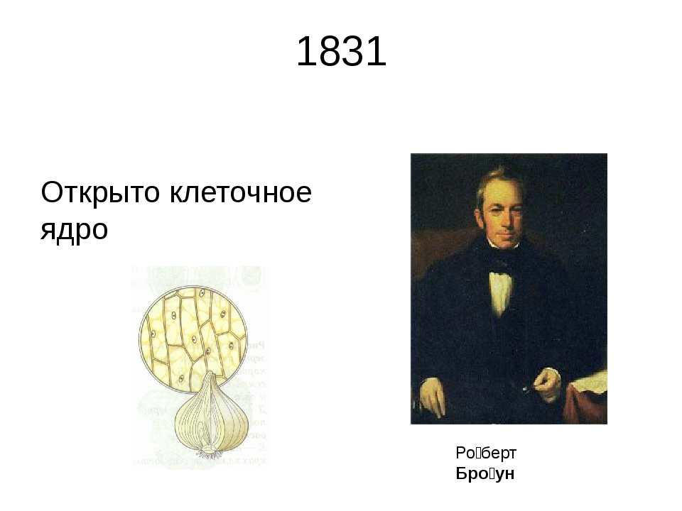 1831 Открыто клеточное ядро Ро́берт Бро́ун Ро́берт Бро́ун (англ. Robert Brow...