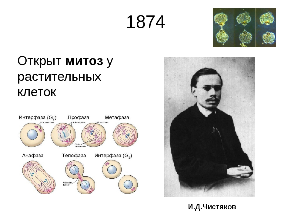 1874 Открыт митоз у растительных клеток И.Д.Чистяков Ива́н Дорофе́евич Чистяк...