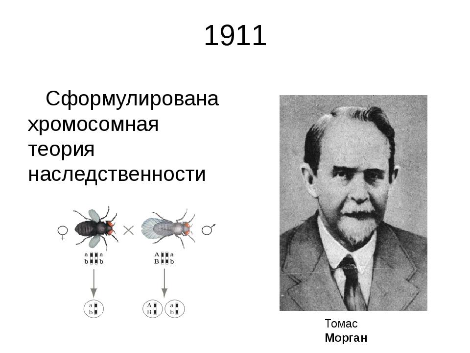1911 Сформулирована хромосомная теория наследственности Томас Морган Томас Ге...