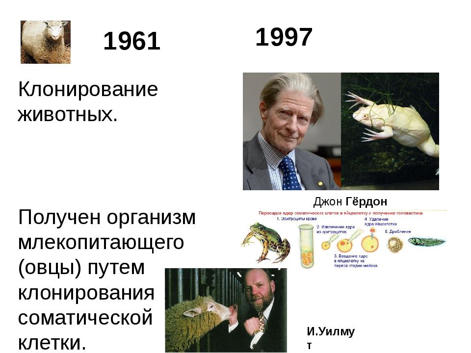 Клонирование животных. Получен организм млекопитающего (овцы) путем клонирова...