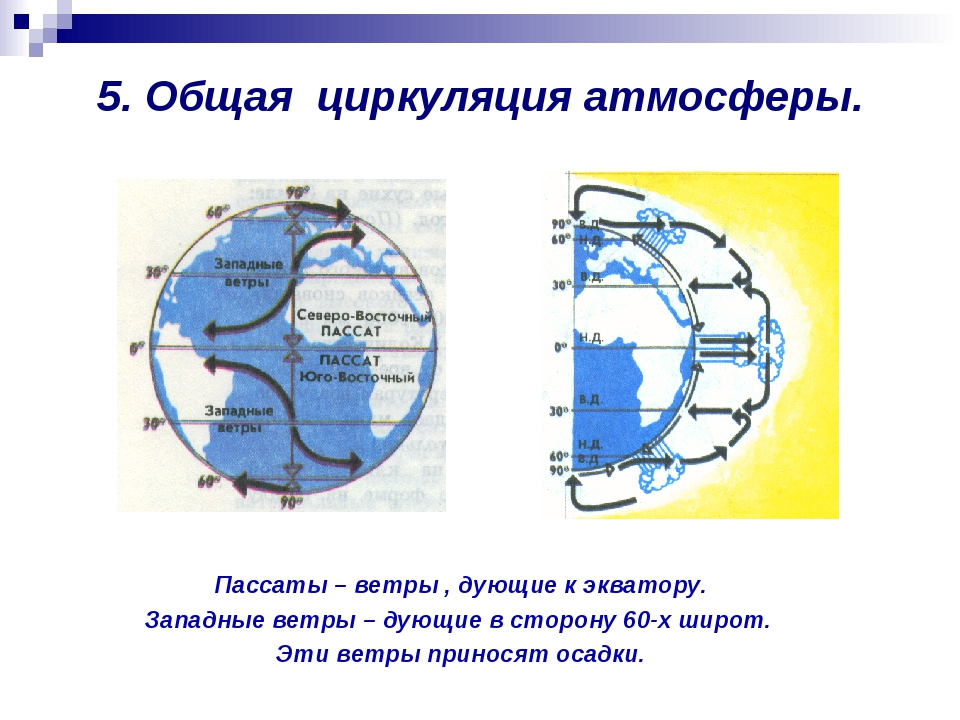5. Общая циркуляция атмосферы. Пассаты – ветры , дующие к экватору. Западные...