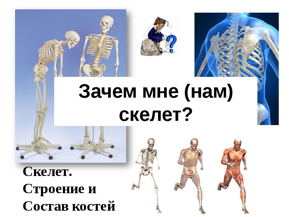 Скелет. Строение и Состав костей Зачем мне (нам) скелет?