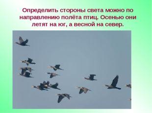 Определить стороны света можно по направлению полёта птиц. Осенью они летят н