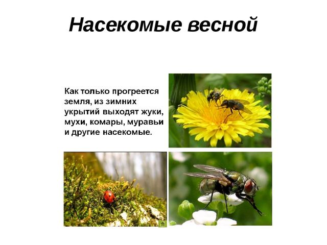 Насекомые весной