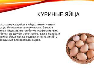 КУРИНЫЕ ЯЙЦА Белок, содержащийся в яйцах, имеет самую высокую биологическую ц