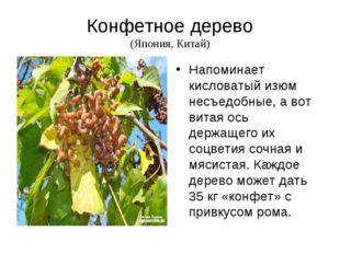 Конфетное дерево (Япония, Китай) Напоминает кисловатый изюм несъедобные, а во