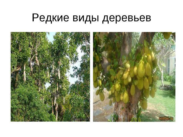 Редкие виды деревьев