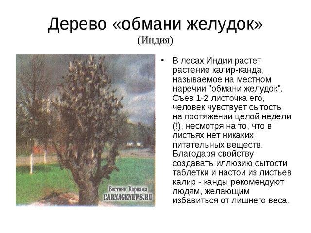 Дерево «обмани желудок» (Индия) В лесах Индии растет растение калир-канда, на...