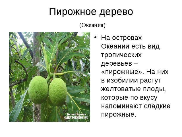 Пирожное дерево (Океания) На островах Океании есть вид тропических деревьев –...