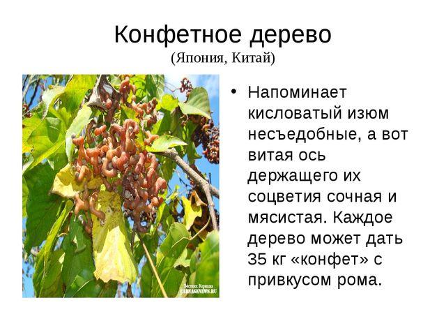 Конфетное дерево (Япония, Китай) Напоминает кисловатый изюм несъедобные, а во...