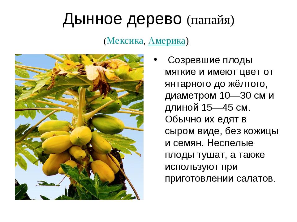 Дынное дерево (папайя) (Мексика,Америка) Созревшие плоды мягкие и имеют цве...