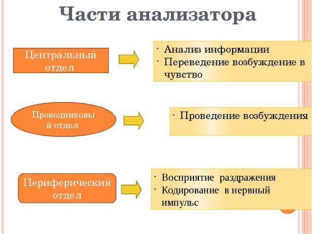 Части анализатора Периферический отдел Проводниковый отдел Центральный отдел...