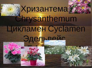 ХризантемаChrysanthemum ЦикламенCyclamen ЭдельвейсEdelweiss