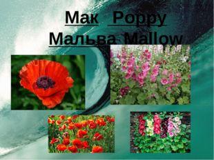 Мак Poppy МальваMallow