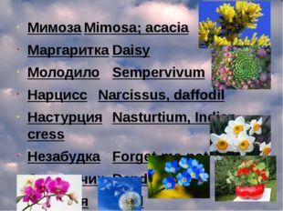 МимозаMimosa; acacia МаргариткаDaisy МолодилоSempervivum НарциссNarcissu