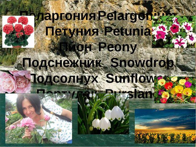 ПеларгонияPelargonium ПетунияPetunia ПионPeony ПодснежникSnowdrop Подсолн...
