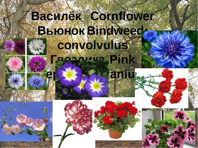 ВасилёкCornflower ВьюнокBindweed; convolvulus ГвоздикаPink ГераньGeranium