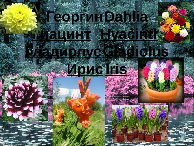 ГеоргинDahlia ГиацинтHyacinth ГладиолусGladiolus ИрисIris