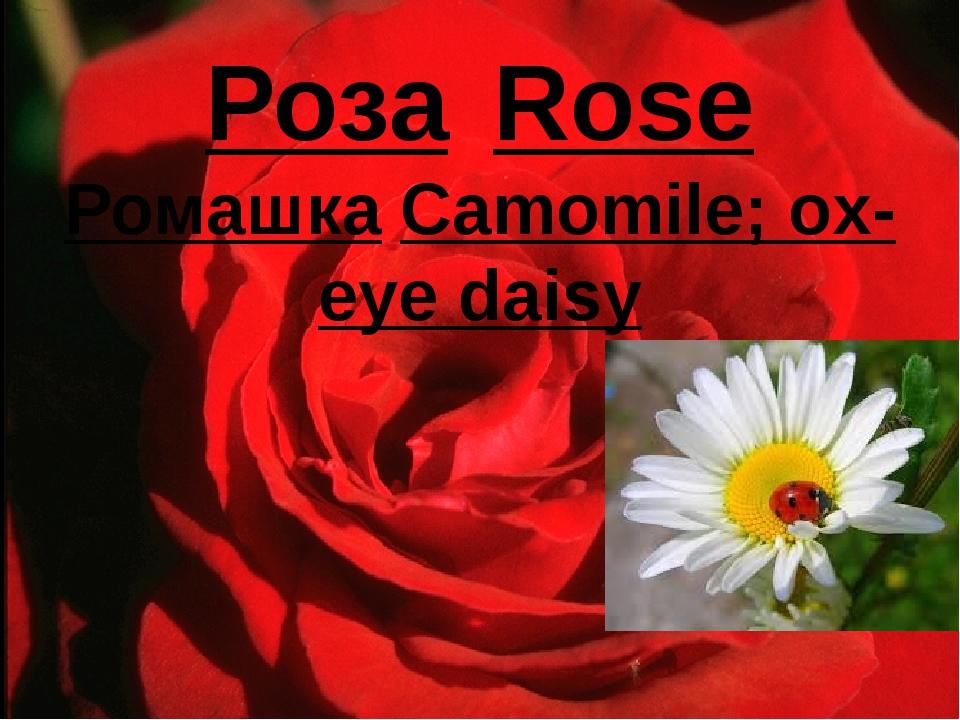 РозаRose РомашкаCamomile; ox-eye daisy