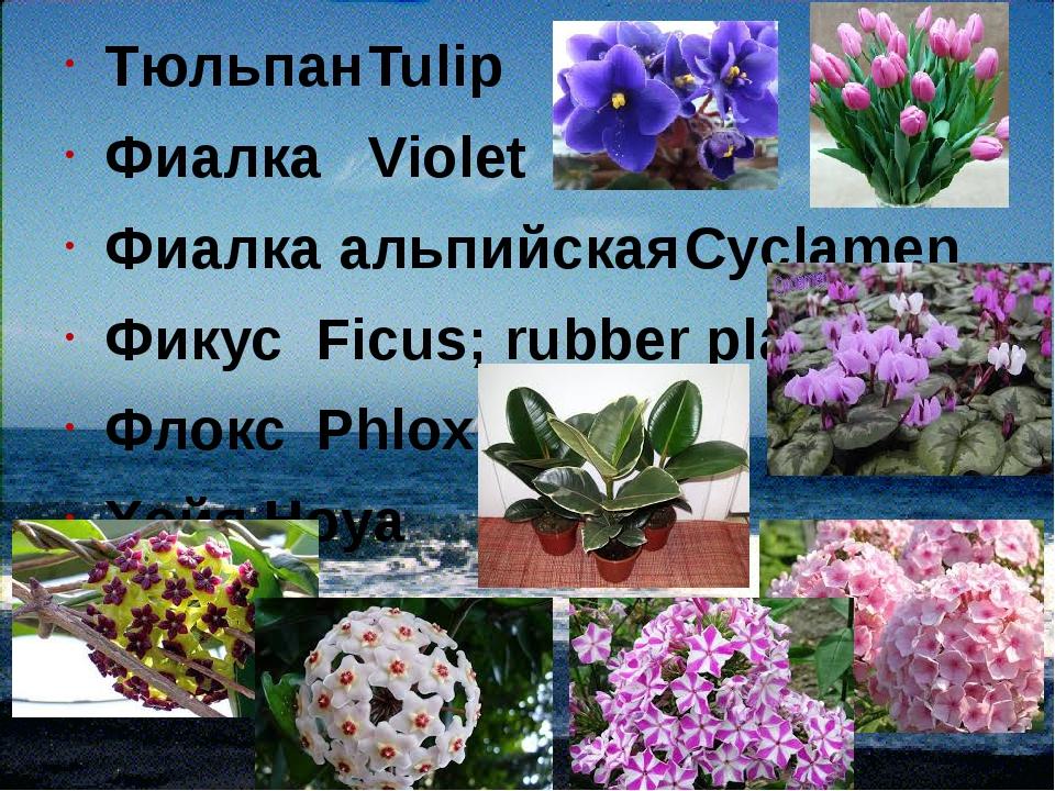 ТюльпанTulip ФиалкаViolet Фиалка альпийскаяCyclamen ФикусFicus; rubber p...