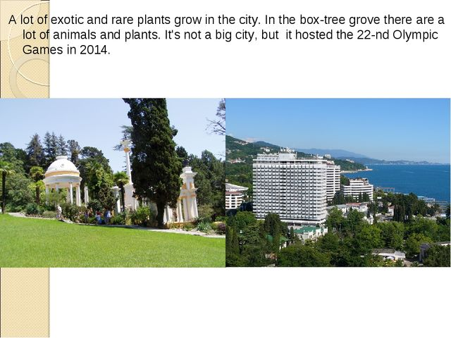 A lot of exotic and rare plants grow in the city. In the box-tree grove there...