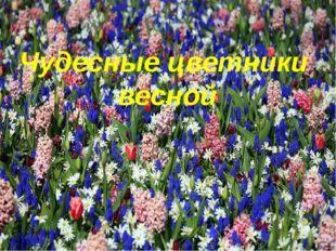 Чудесные цветники весной