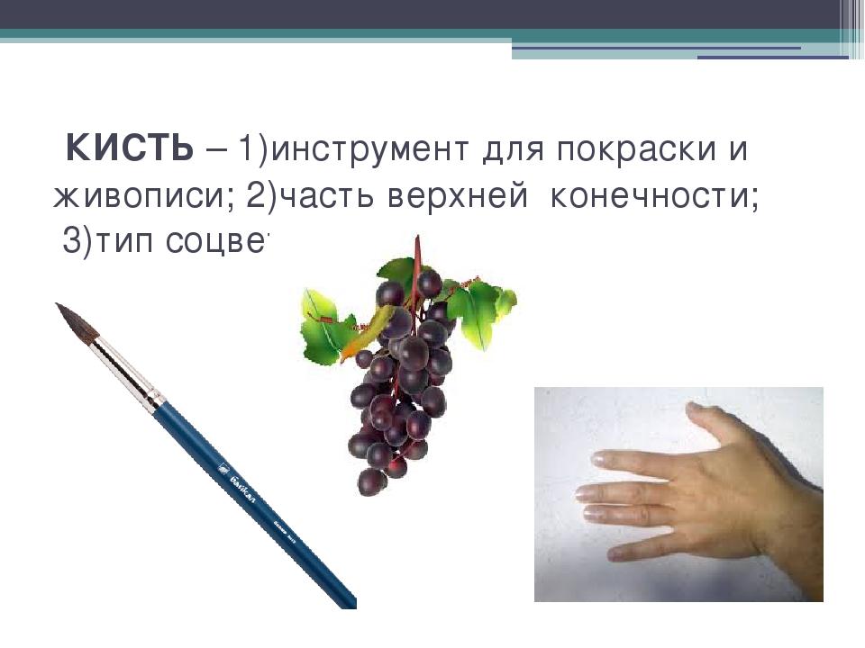 КИСТЬ – 1)инструмент для покраски и живописи; 2)часть верхней конечности; 3)...