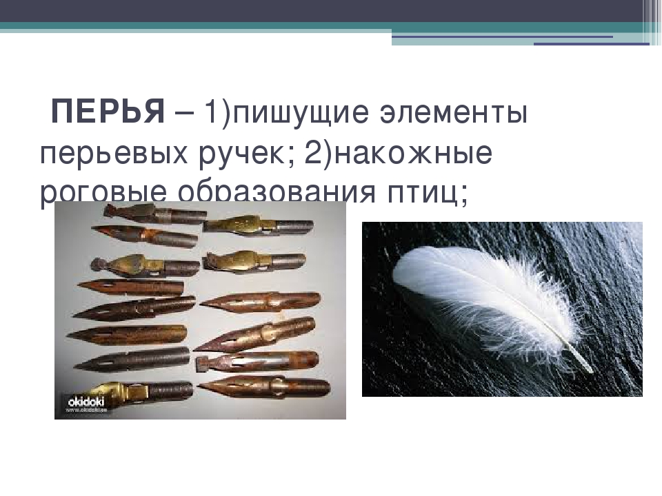 ПЕРЬЯ – 1)пишущие элементы перьевых ручек; 2)накожные роговые образования пт...