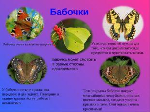 Бабочки Бабочка очень интересно устроена. Усики-антенны ей нужны для того, чт