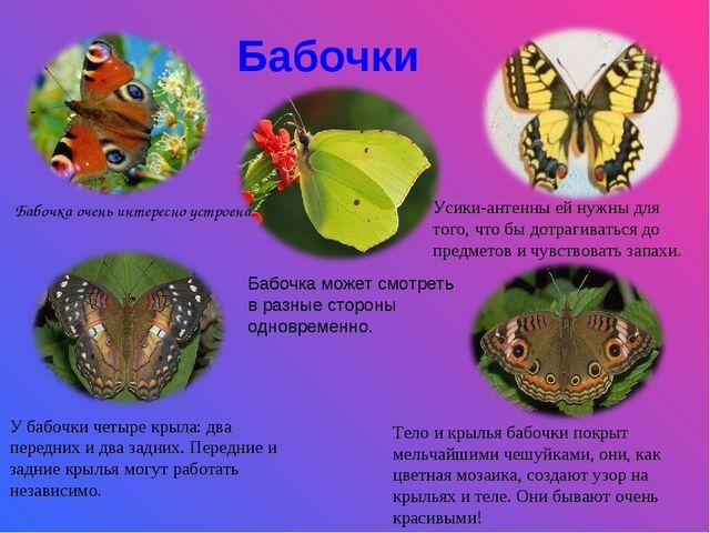Бабочки Бабочка очень интересно устроена. Усики-антенны ей нужны для того, чт...