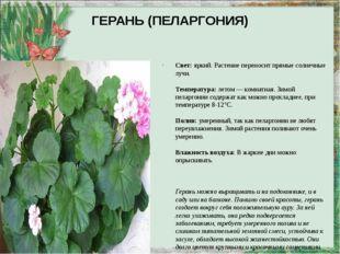 ГЕРАНЬ (ПЕЛАРГОНИЯ) Свет:яркий. Растение переносит прямые солнечные лучи. Те