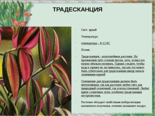 ТРАДЕСКАНЦИЯ Свет: яркий Температура: температура – 8-12 0С Полив: Традесканц