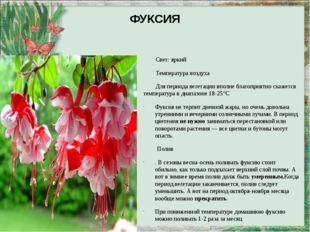 ФУКСИЯ Свет: яркий Температура воздуха Для периода вегетации вполне благоприя