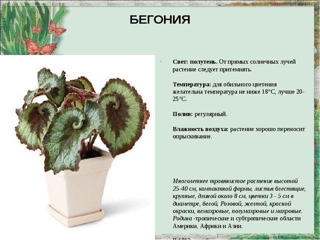 БЕГОНИЯ Свет:полутень.От прямых солнечных лучей растение следует притемнять...