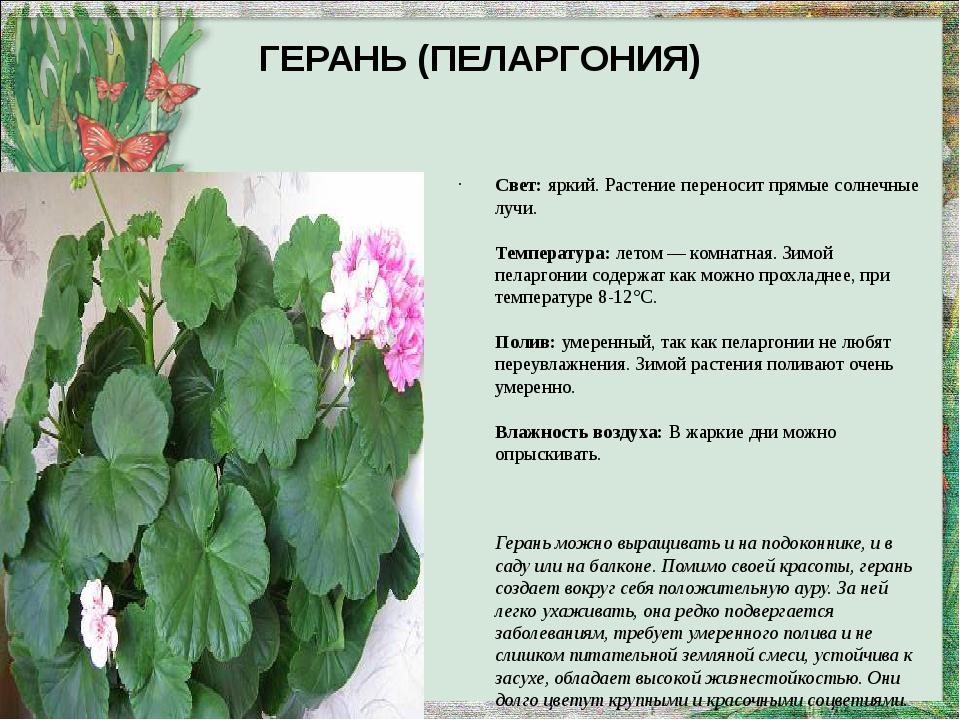 ГЕРАНЬ (ПЕЛАРГОНИЯ) Свет:яркий. Растение переносит прямые солнечные лучи. Те...