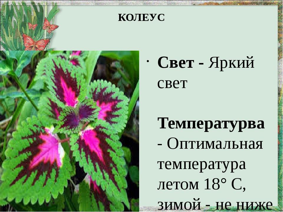 КОЛЕУС Свет -Яркий свет Температурва- Оптимальная температура летом 18° С,...