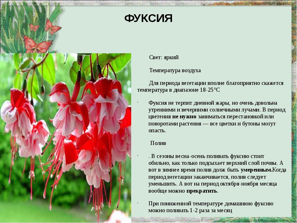 ФУКСИЯ Свет: яркий Температура воздуха Для периода вегетации вполне благоприя...