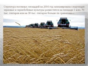 Структура посевных площадей на 2016 год запланирована следующая: зерновые и з